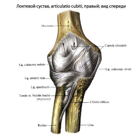 az ízület fáj egy hosszú séta után ízületi fájdalom térd húzza a térd alatt