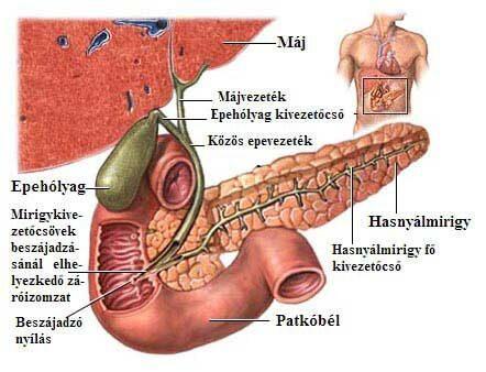 epe és ízületek betegségei