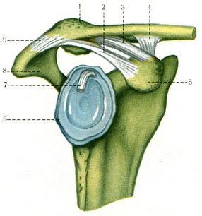 uhf a vállízület artrózisában